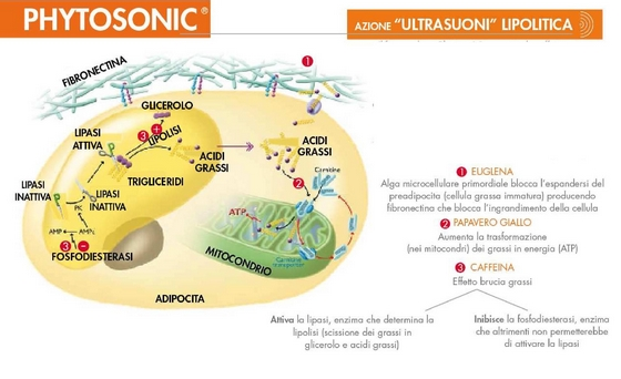 Phytosonic ultrasuoni simile